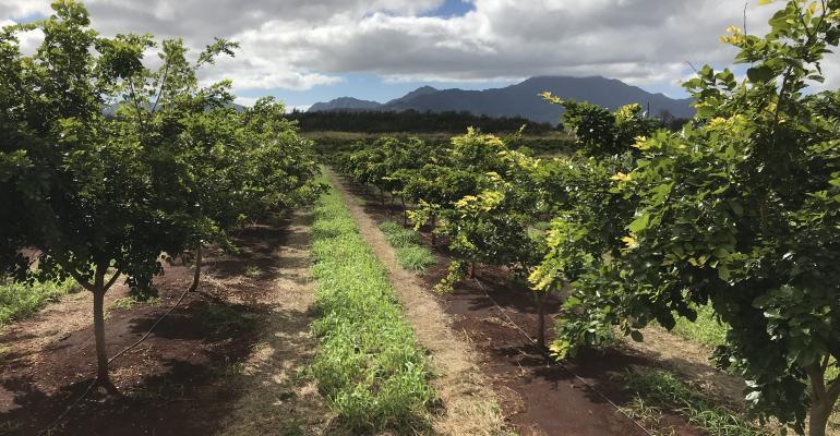 TerViva pongamia orchard.jpg