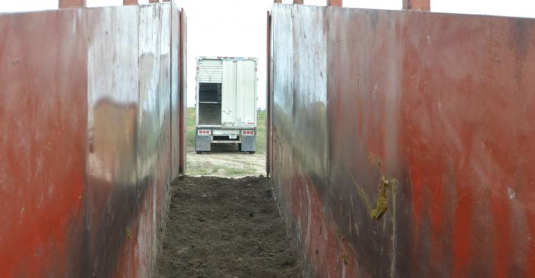 Truck backing up to cattle chute_Diane-Kay_iStock-484131546.jpg