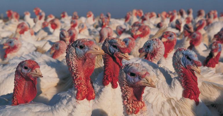 Turkeys_Digital Vision_Photodisc-dv191007.jpg