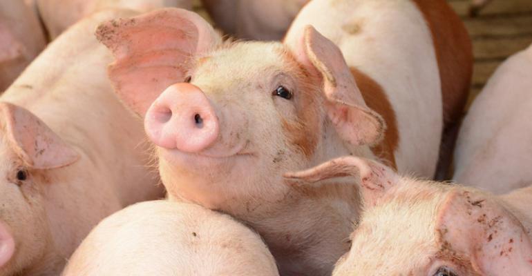 U Ill Smiling pig web size.jpg
