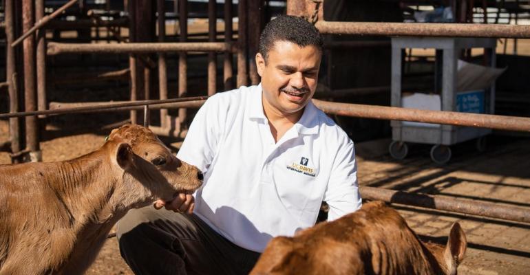 UCDavis Aly dairy calves BRD.jpg