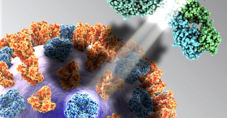 Schematic of influenza virus surface proteins
