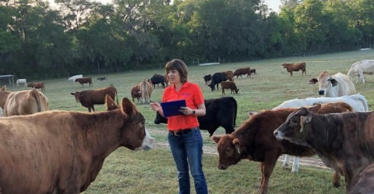 Raluca Mateescu, UF/IFAS, examining beef cattle