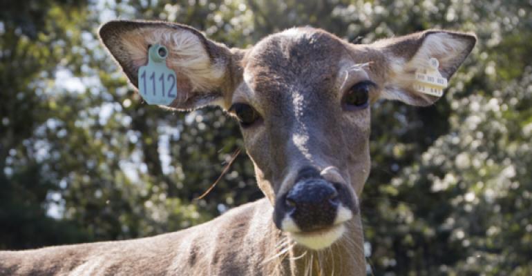 UFla deer-vaccine-feature2.jpg