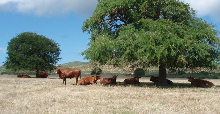 UGa multistate cattle.jpg