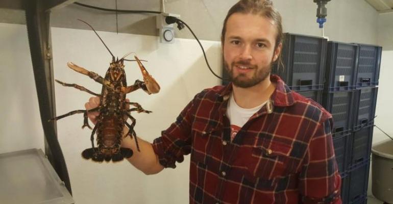 UGothenburg Hinchcliffe lobster.jpg
