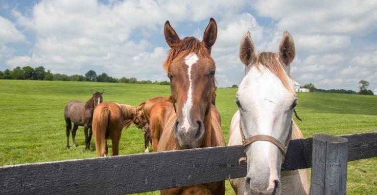 UKy horses.jpg