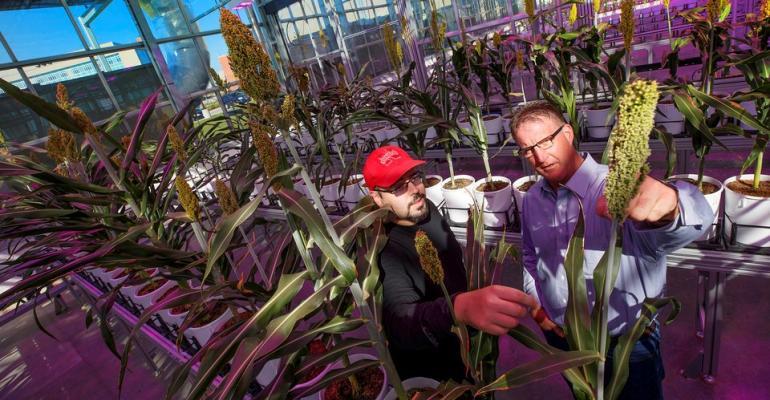 UNL fertilizer research.jpg