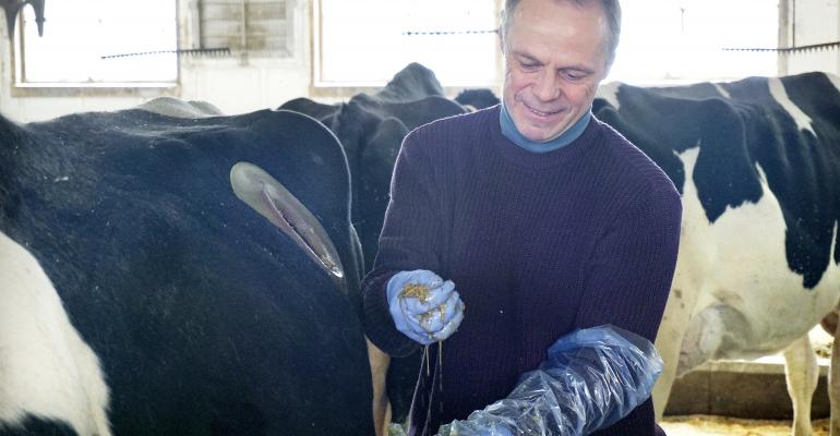 Michel Wattiaux examines the contents of a cow's stomach.