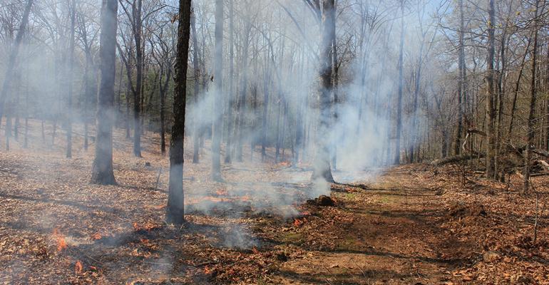 Prescribed burn on University of Missouri Forest Conservation Area land