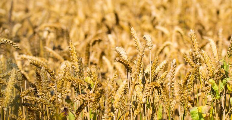 Wheat--barmalini_iStock_Thinkstock-577634624.jpg