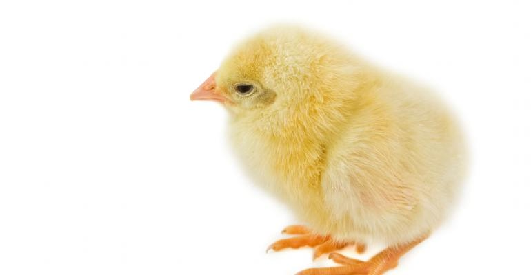 Yellow chick_ Zoonar-P.Jilek_Zoonar_Thinkstock-183866933.jpg