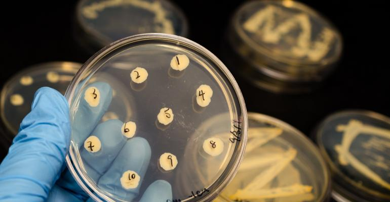 bacteria on culture plates
