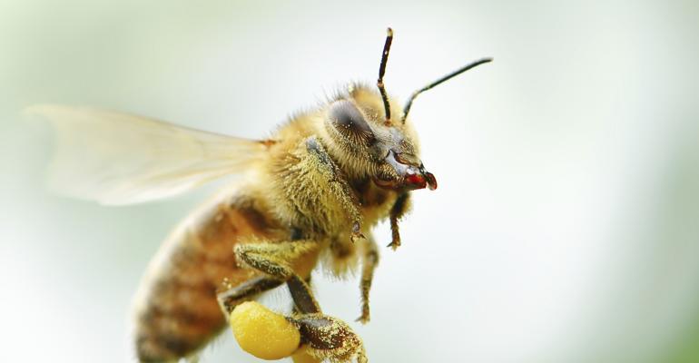 bee flying_Serg_Velusceac_iStock-514754451.jpg