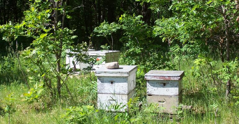 honeybee hives