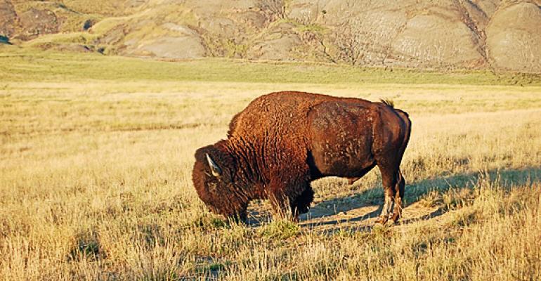 bison campaign