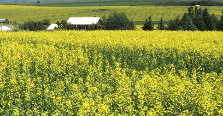 Canola may be a good option for California growers.