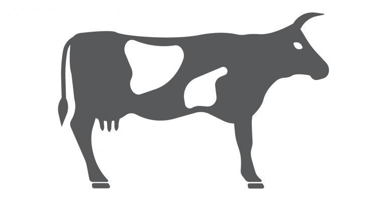 cattle cartoon