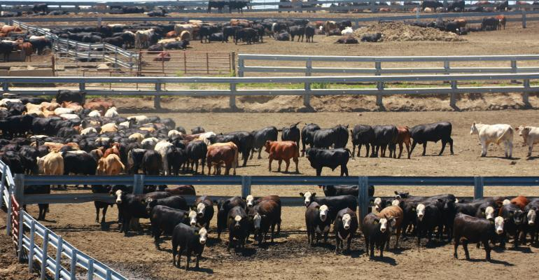Cattle Disease Traceability Project Moving Forward
