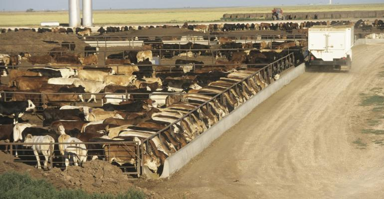 cattle feedlot in Texas_Andy Sacks_iStock_Getty Images-200435492-001.jpg