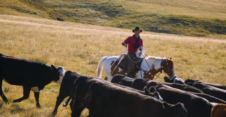 cattle herd cowboy_Design Pics_Thinkstock-81171550.jpg