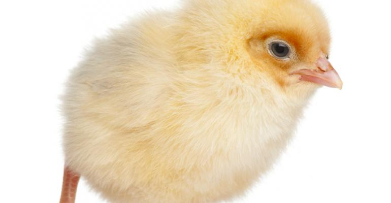 chick - yellow 2 days old_GlobalP_iStock_Thinkstock-517464192.jpg