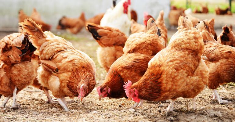 chickens - free-range hens_monticelllo_iStock_Thinkstock-478287121.jpg