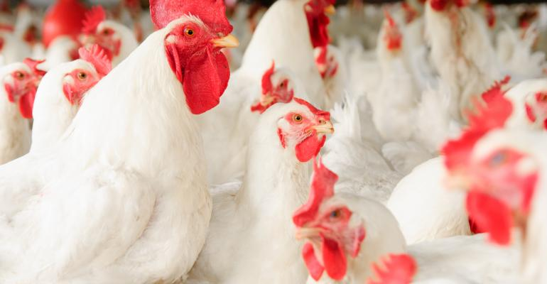 chickens - white broilers_FDS_sansubba_iStock_Getty Images-172476350.jpg