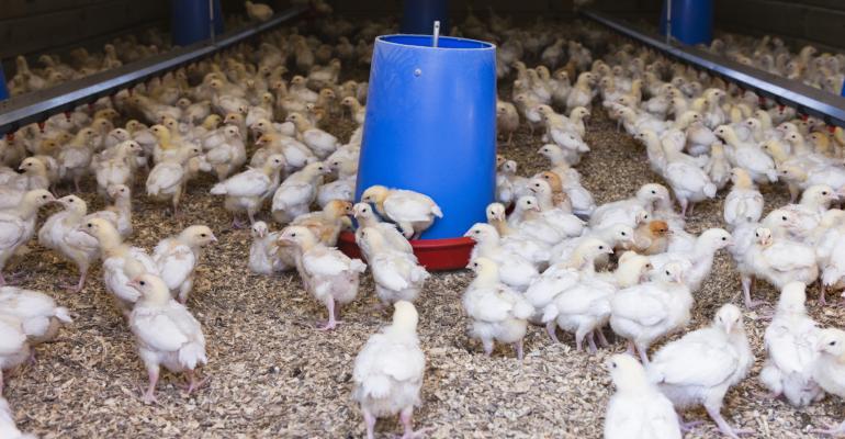 chickens by feeder_Jupiterimages_BananaStock-86522108.jpg
