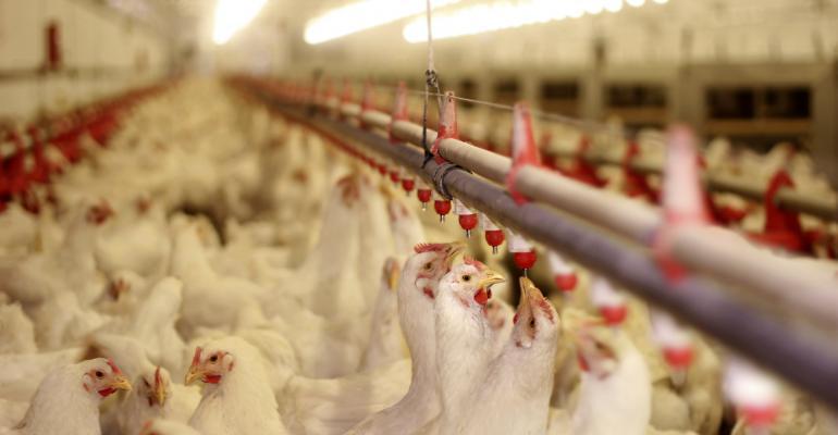 chickens_poultry barn_branex_iStock-485926413.jpg
