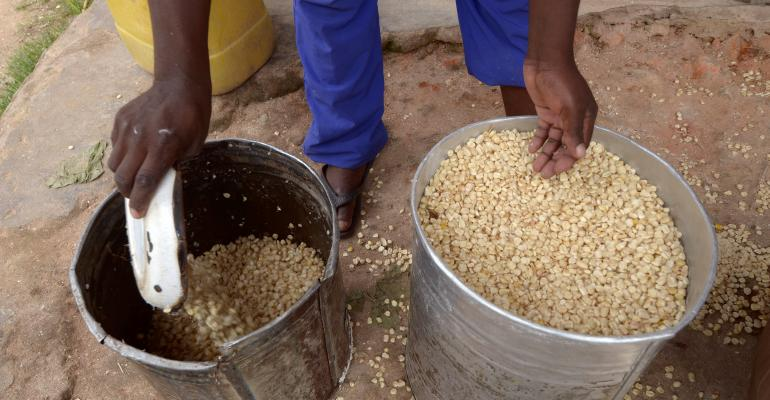 corn or maize in buckets in Africa