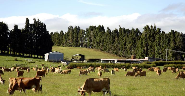 cows grazing paddock-shutterstock_76880446.jpg