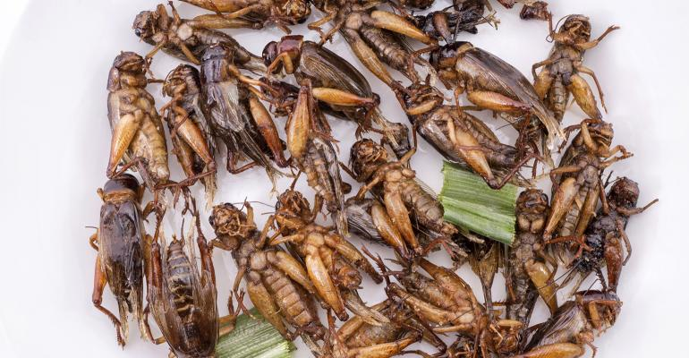 edible crickets in circle with celery