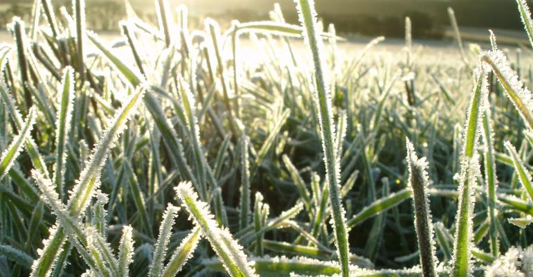 crop with frost