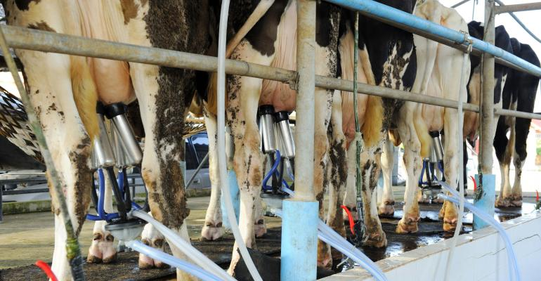 dairy cows being milked_narapornm_iStock_Getty Images-526424517.jpg