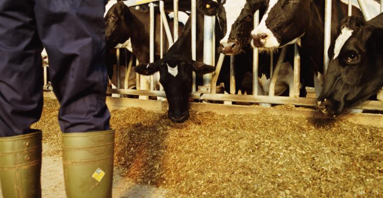 dairy farm worker