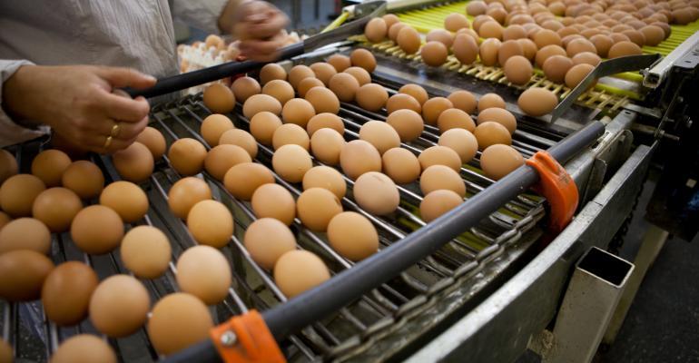 egg inspection on conveyor belt