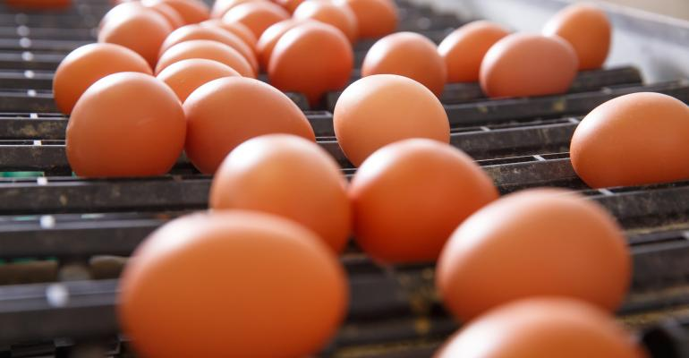 Brown eggs on a production facility conveyor belt