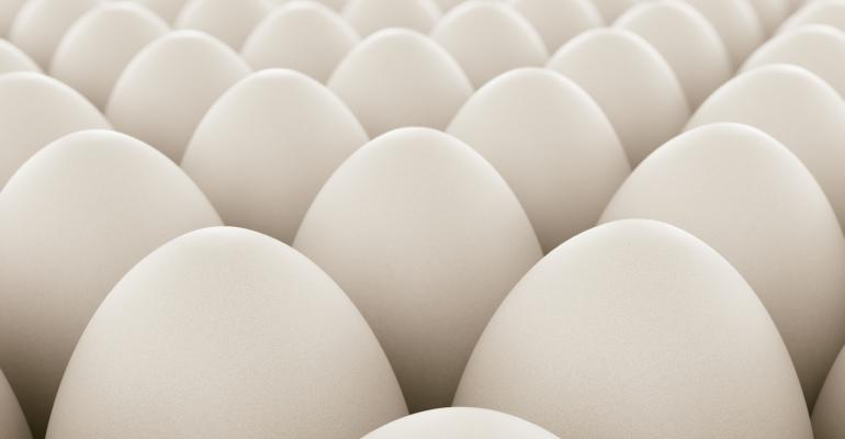 White eggs lined up in neat rows