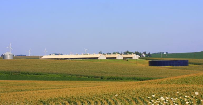 hog barns farm and wind turbines in Iowa corn field