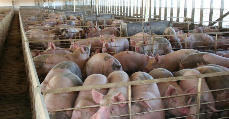 hogs in Iowa finishing barn_DarcyMaulsby_iStock_Thinkstock-503663708.jpg
