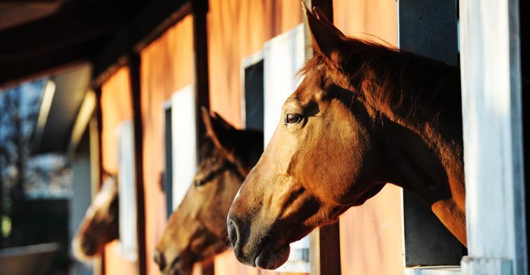 horses in stable_shutterstock_92698831.jpg