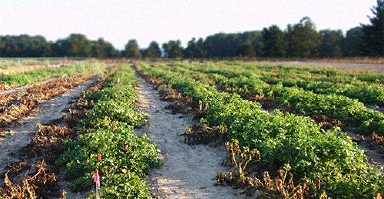 innate-gen-2-potatoes.jpg