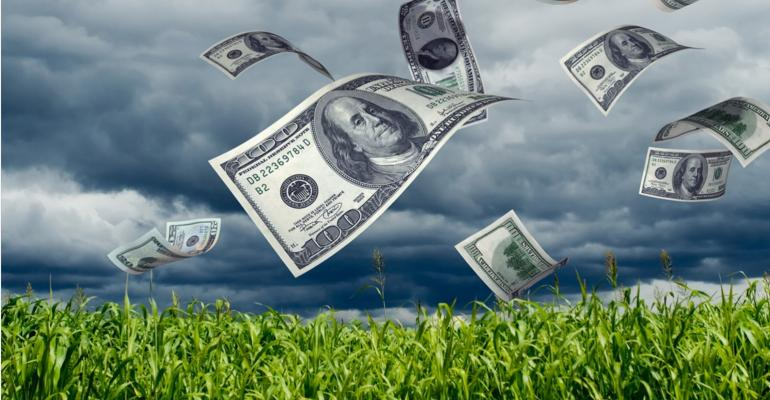 money blowing from cornfield