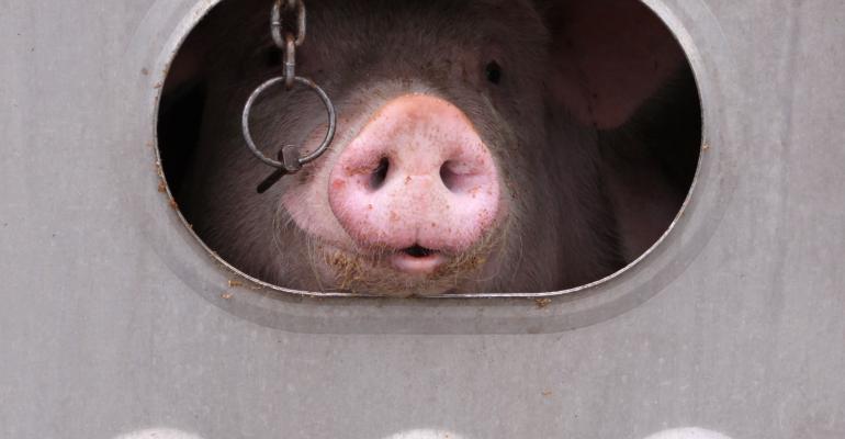 pig in livestock trailer-shutterstock_81047980.jpg