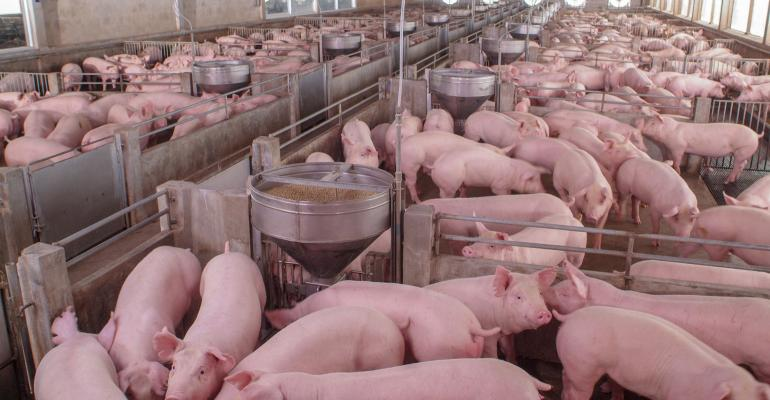 pig-farm-GettyImages-1068384316.jpg