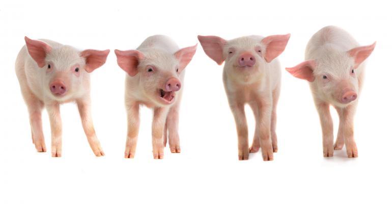 piglets in a row_bazilfoto_iStock-496611528.jpg