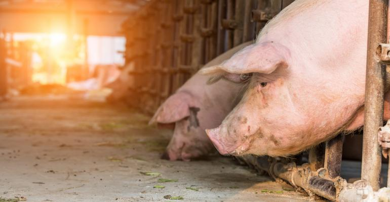 pigs on farm in China_zhaojiankang_iStock_Getty Images-700500398.jpg