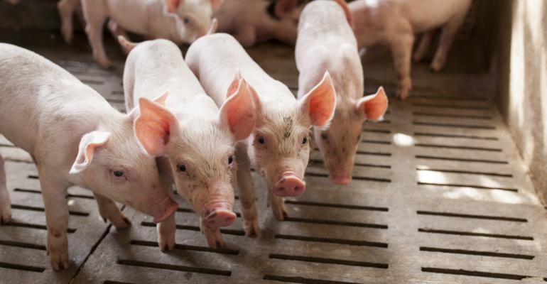 pigs_Patarapong_iStock-489808134 (2).jpg