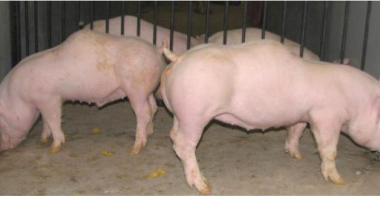humpback kyphosis pigs